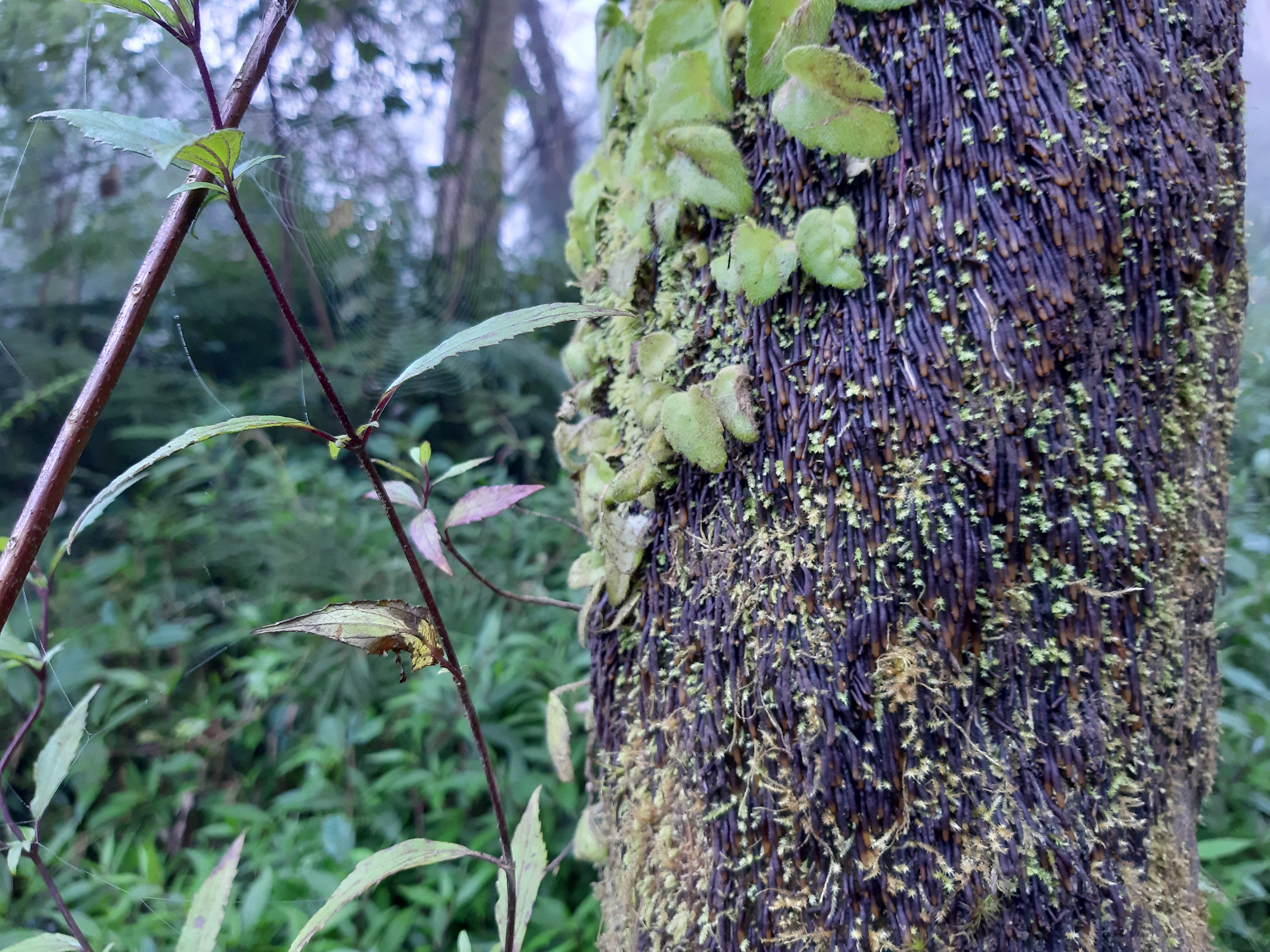 Lichen growing on a tree, cobwebs, greenery. This photo has it all.
