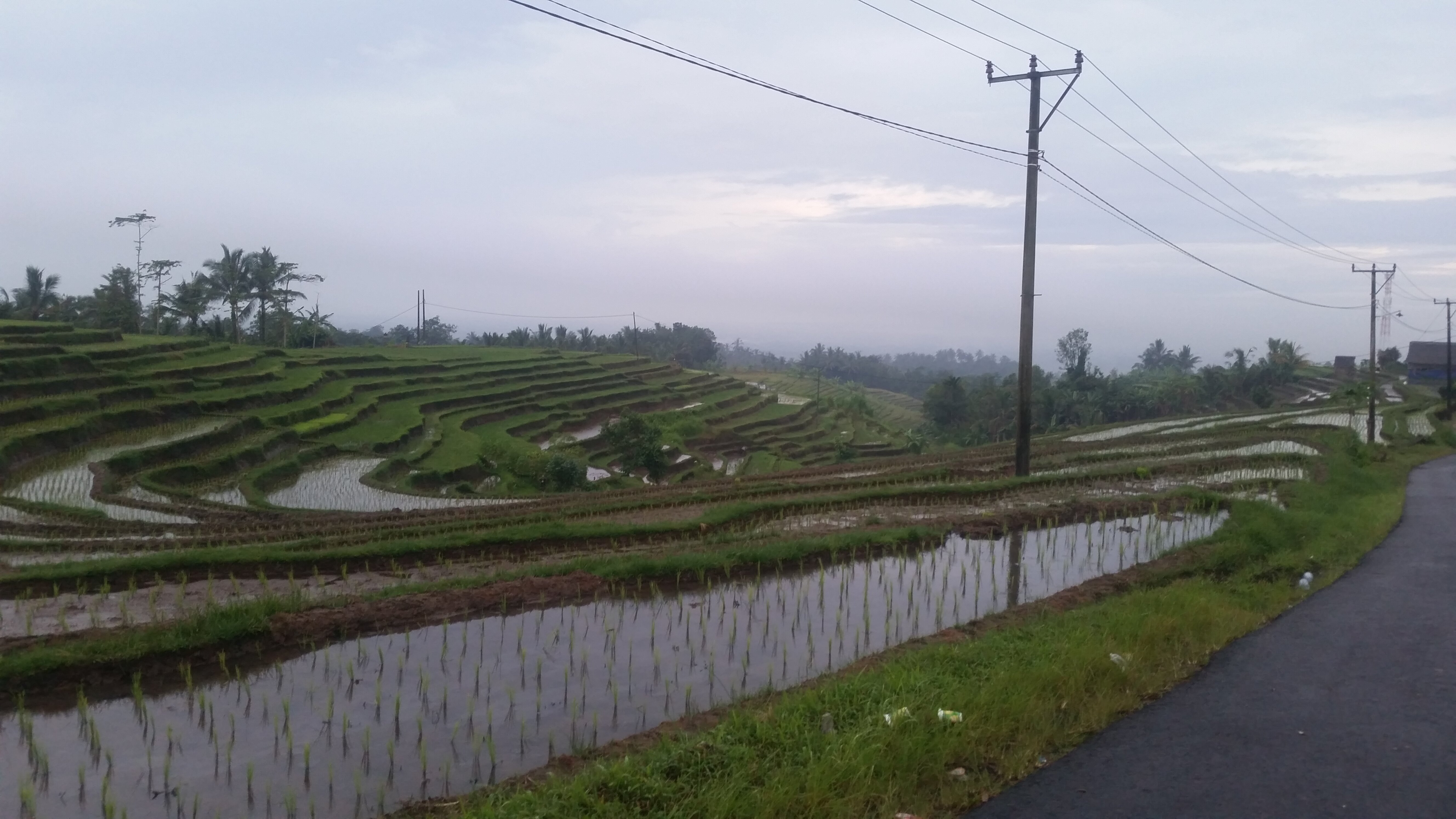 Rice paddy that the procession passed.