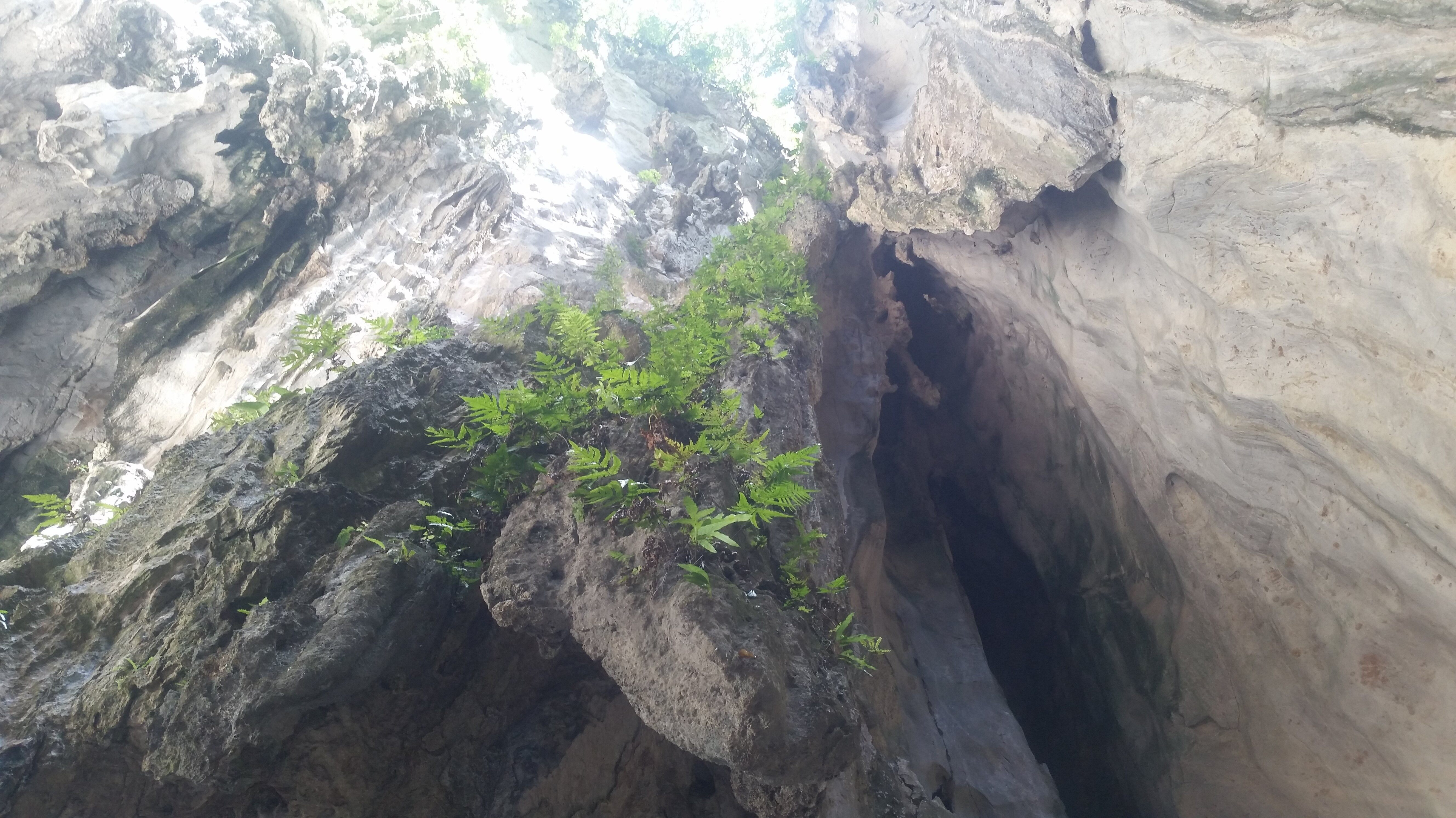 Looking up at a stalactite with growing foliage.